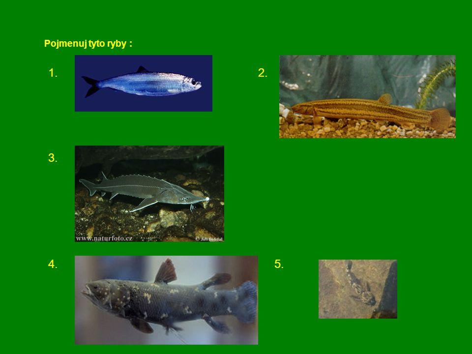 Pojmenuj tyto ryby : 1. 2. 3. 4. 5.