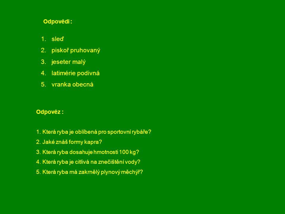 1.sleď 2.piskoř pruhovaný 3.jeseter malý 4. latimérie podivná 5. vranka obecná Odpověz : 1. Která ryba je oblíbená pro sportovní rybáře? 2. Jaké znáš
