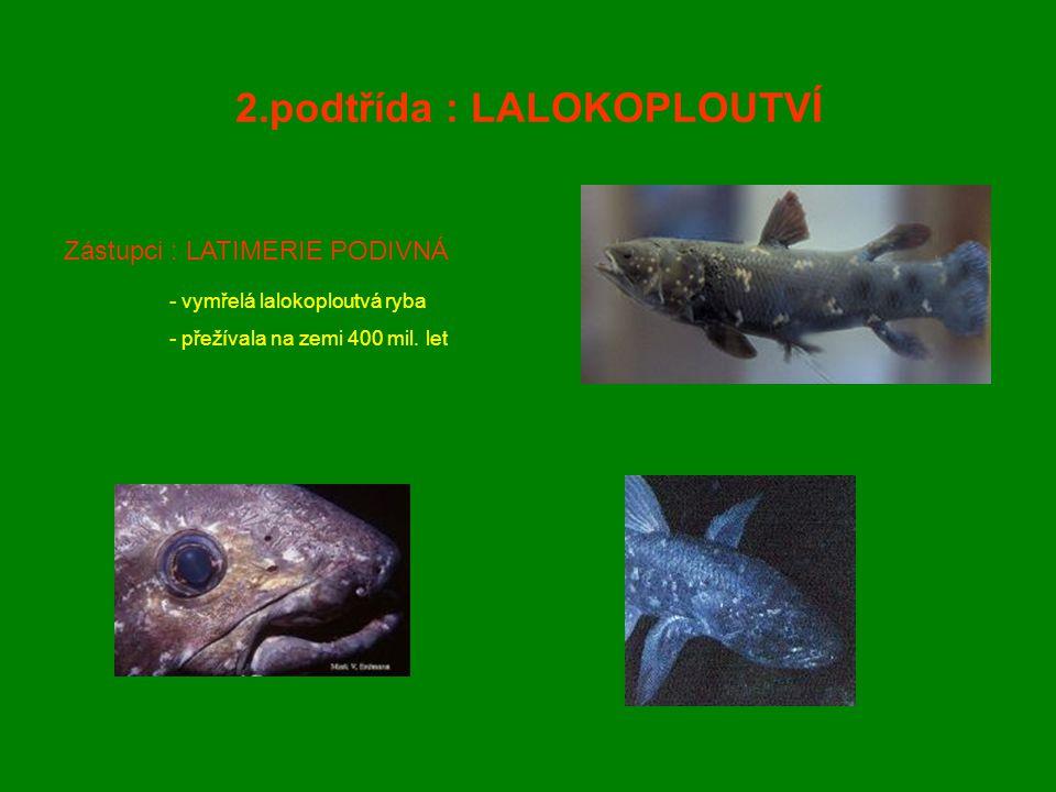 2.podtřída : LALOKOPLOUTVÍ Zástupci : LATIMERIE PODIVNÁ - vymřelá lalokoploutvá ryba - přežívala na zemi 400 mil. let
