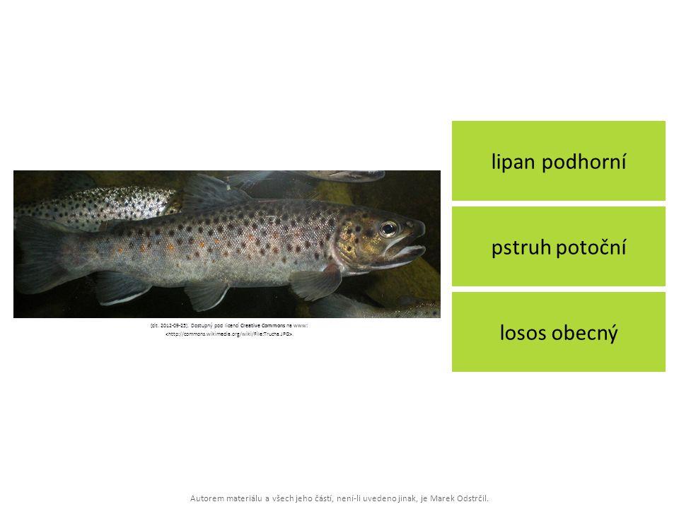 Autorem materiálu a všech jeho částí, není-li uvedeno jinak, je Marek Odstrčil. lipan podhorní losos obecný pstruh potoční [cit. 2012-09-25]. Dostupný