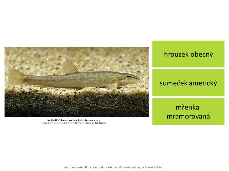 Autorem materiálu a všech jeho částí, není-li uvedeno jinak, je Marek Odstrčil. hrouzek obecný mřenka mramorovaná sumeček americký [cit. 2012-09-25].