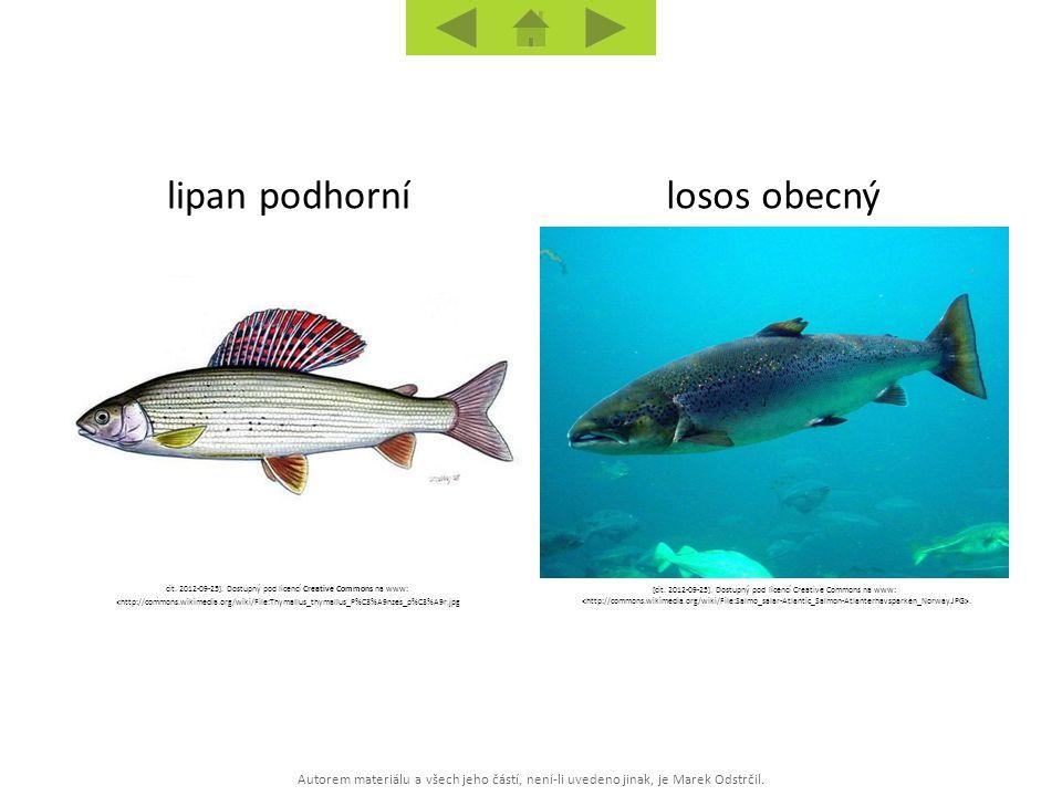 Autorem materiálu a všech jeho částí, není-li uvedeno jinak, je Marek Odstrčil. losos obecnýlipan podhorní cit. 2012-09-25]. Dostupný pod licencí Crea