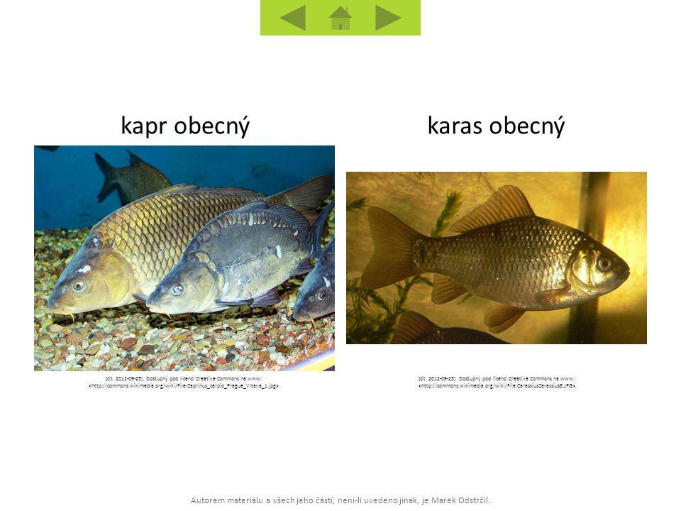 Autorem materiálu a všech jeho částí, není-li uvedeno jinak, je Marek Odstrčil. karas obecnýkapr obecný [cit. 2012-09-25]. Dostupný pod licencí Creati