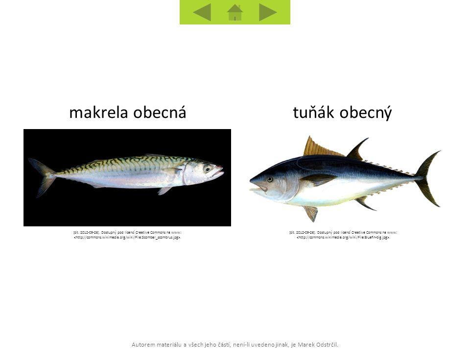 Autorem materiálu a všech jeho částí, není-li uvedeno jinak, je Marek Odstrčil. tuňák obecnýmakrela obecná [cit. 2012-09-26]. Dostupný pod licencí Cre