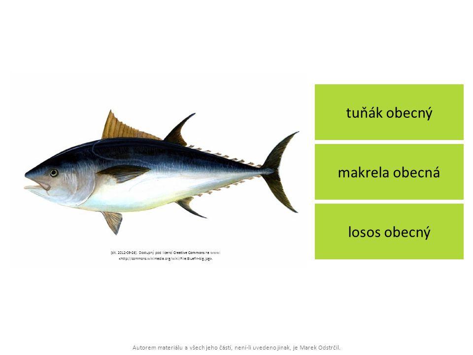 Autorem materiálu a všech jeho částí, není-li uvedeno jinak, je Marek Odstrčil. tuňák obecný losos obecný makrela obecná [cit. 2012-09-26]. Dostupný p