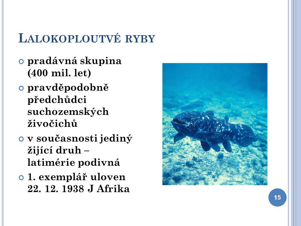 L ALOKOPLOUTVÉ RYBY pradávná skupina (400 mil. let) pravděpodobně předchůdci suchozemských živočichů v současnosti jediný žijící druh – latimérie podi