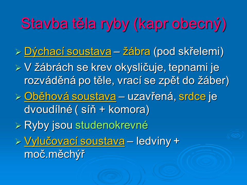 Ryby – obecné shrnutí JJJJsou vodní obratlovci MMMMají vnitřní kostru, jejíž osou je páteř složená z obratlů PPPPohyb jim umožňují ploutve a svaly TTTTělo nadlehčuje plynový měchýř DDDDýchají žábrami MMMMají dvoudílné srdce NNNNervová soustava – mozek, mícha, nervy SSSSmysly – oči, vnitřní ucho, čichové jamky, hmatové vousy, postranní čára