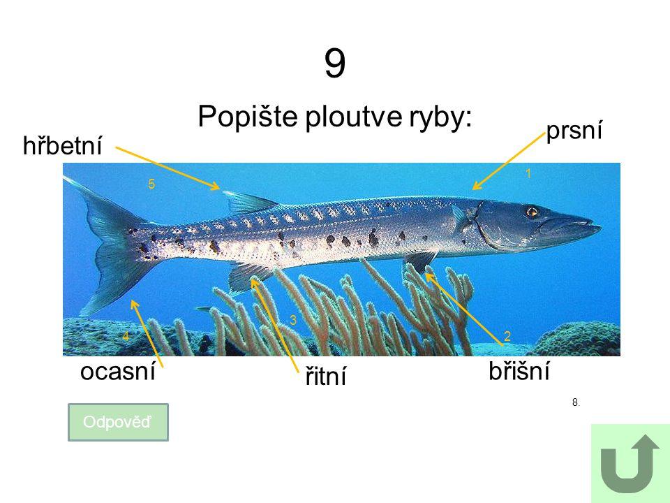 9 Popište ploutve ryby: Odpověď břišní prsní ocasní hřbetní 8. 1 24 5 3 řitní