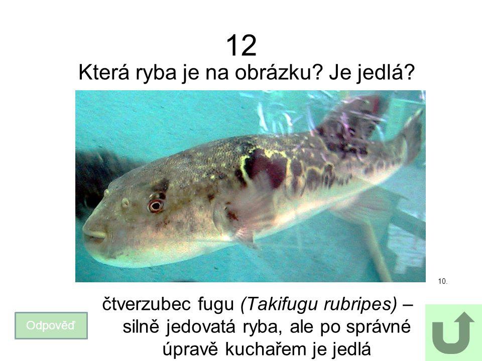 12 Která ryba je na obrázku? Je jedlá? Odpověď čtverzubec fugu (Takifugu rubripes) – silně jedovatá ryba, ale po správné úpravě kuchařem je jedlá 10.