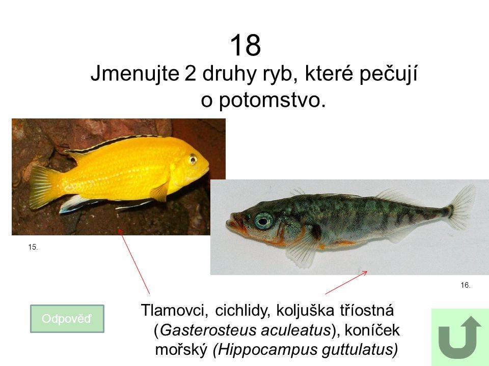18 Jmenujte 2 druhy ryb, které pečují o potomstvo. Odpověď Tlamovci, cichlidy, koljuška tříostná (Gasterosteus aculeatus), koníček mořský (Hippocampus