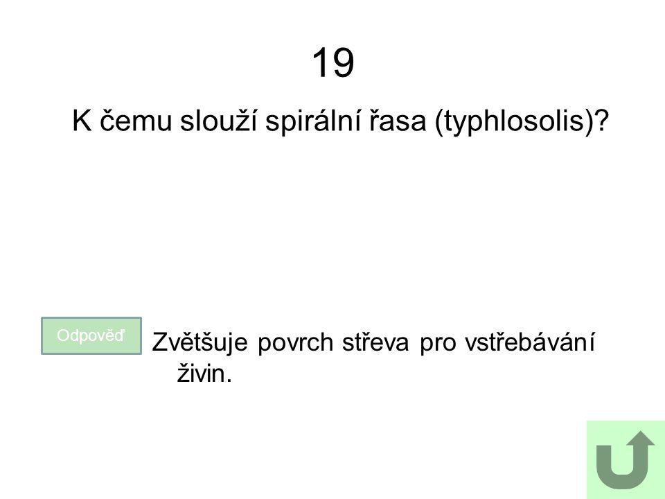 19 K čemu slouží spirální řasa (typhlosolis)? Odpověď Zvětšuje povrch střeva pro vstřebávání živin.