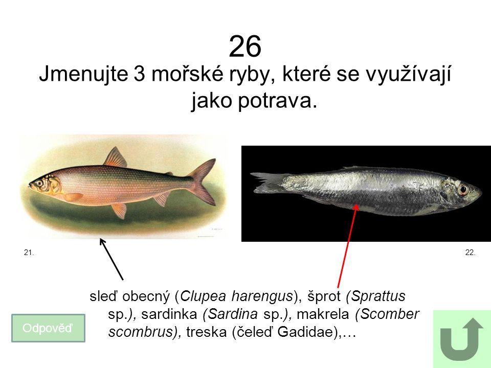 26 Jmenujte 3 mořské ryby, které se využívají jako potrava. Odpověď sleď obecný (Clupea harengus), šprot (Sprattus sp.), sardinka (Sardina sp.), makre