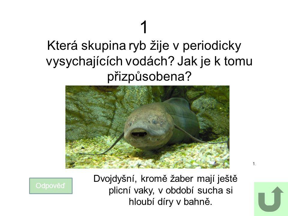 1 Která skupina ryb žije v periodicky vysychajících vodách? Jak je k tomu přizpůsobena? Odpověď 1. Dvojdyšní, kromě žaber mají ještě plicní vaky, v ob