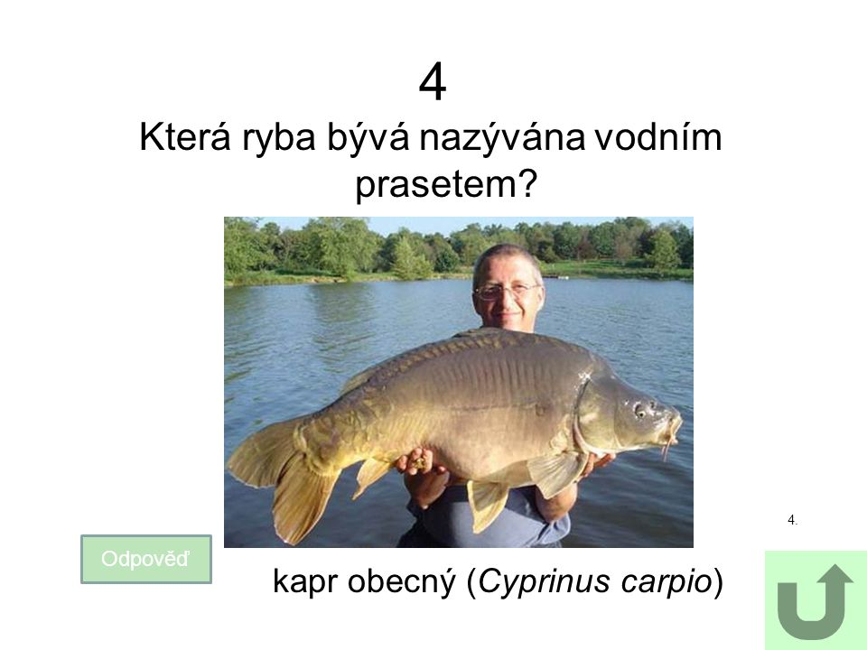 4 Která ryba bývá nazývána vodním prasetem? Odpověď 4. kapr obecný (Cyprinus carpio)