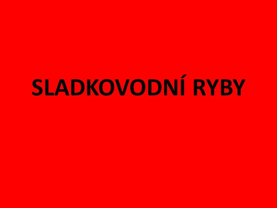 http://rybari.cercany.sweb.cz/ruzne/galerie.ht m http://staryweb.televize- js.cz/view.php?cisloclanku=2008040009 http://hobby.idnes.cz/ve-vodnanech-merili- 13-let-stara-mladata-nejvetsich- sladkovodnich-ryb-1ik- /rybareni.aspx?c=A110405_230647_budejovic e-zpravy_alt