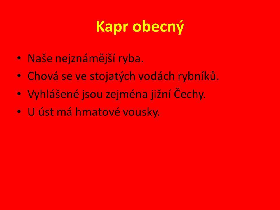 KARAS OBECNÝ