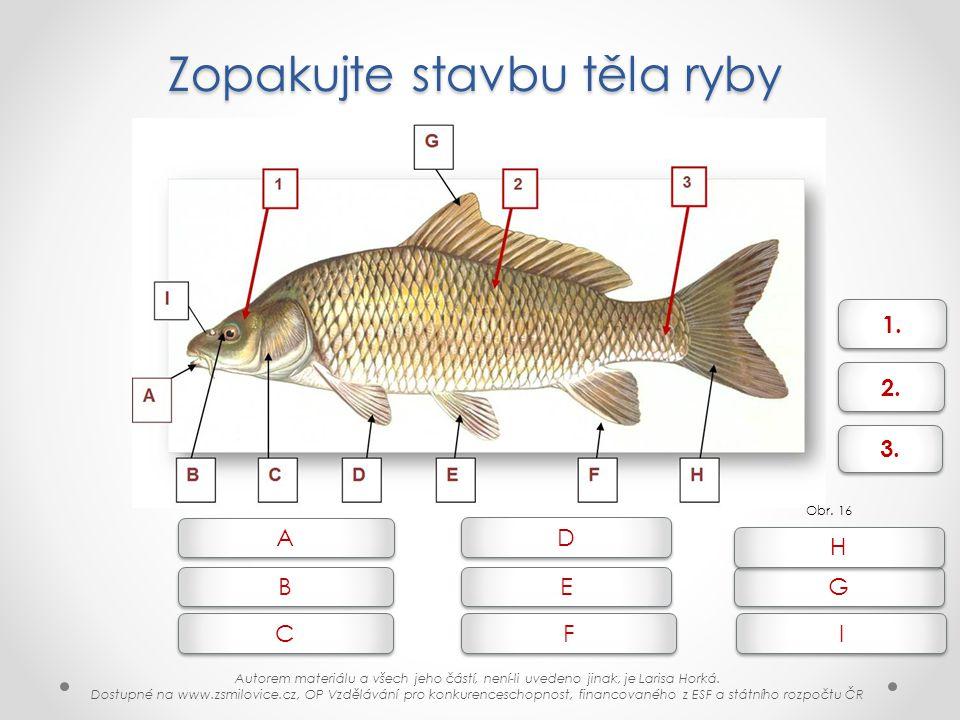 Zopakujte stavbu těla ryby Obr. 16 1. 2. 3. B B A A C C E E D D F F G G H H I I Autorem materiálu a všech jeho částí, není-li uvedeno jinak, je Larisa