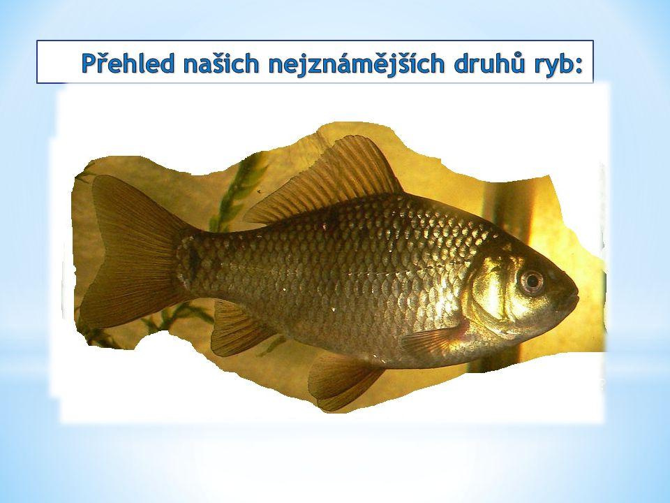 Obratlovci žijící ve sladké i slané vodě. Mají kostěnou kostru a dýchají pomocí žaber. Tělo je většinou kryté šupinami. Vyvinul se u nich proudový org