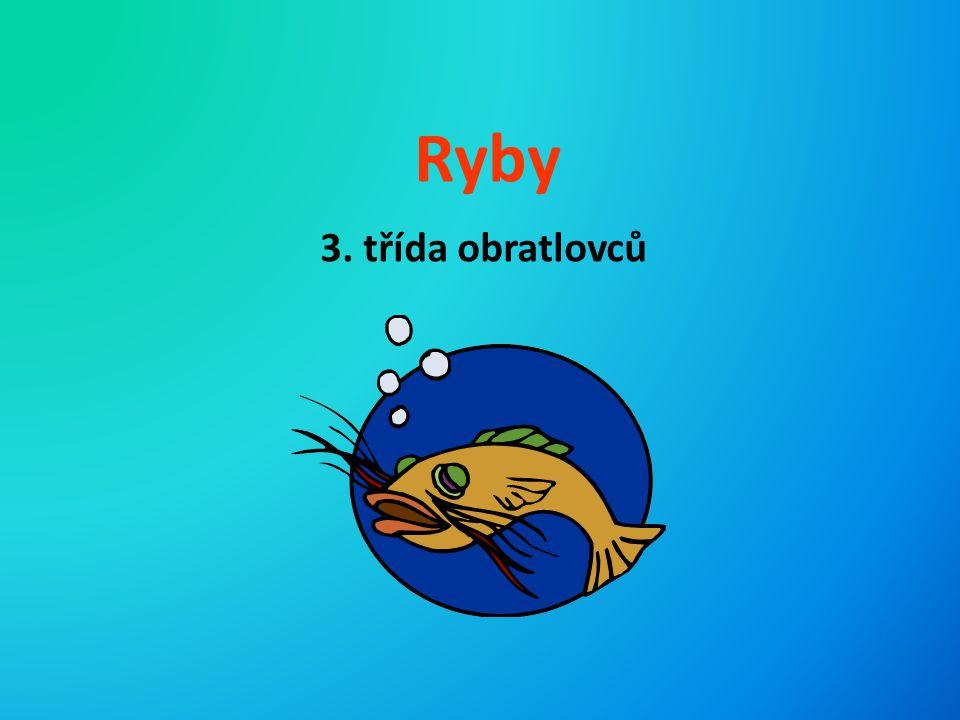 Ryby 3. třída obratlovců