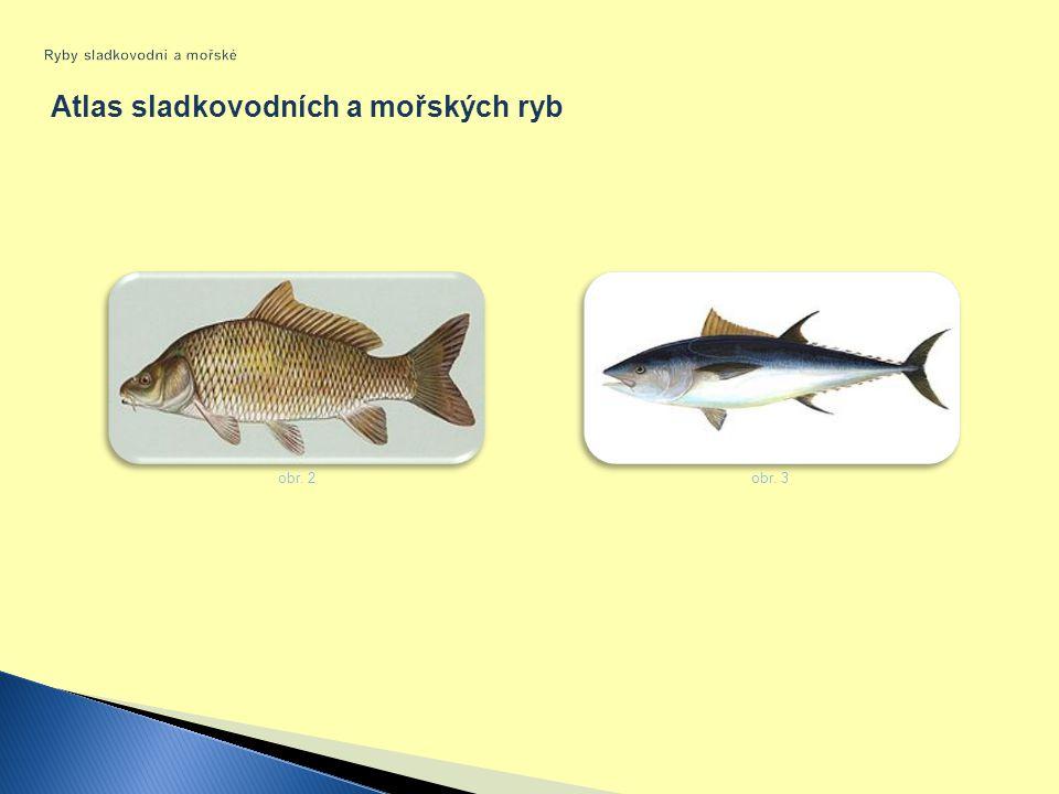 Atlas sladkovodních a mořských ryb obr. 2 obr. 3