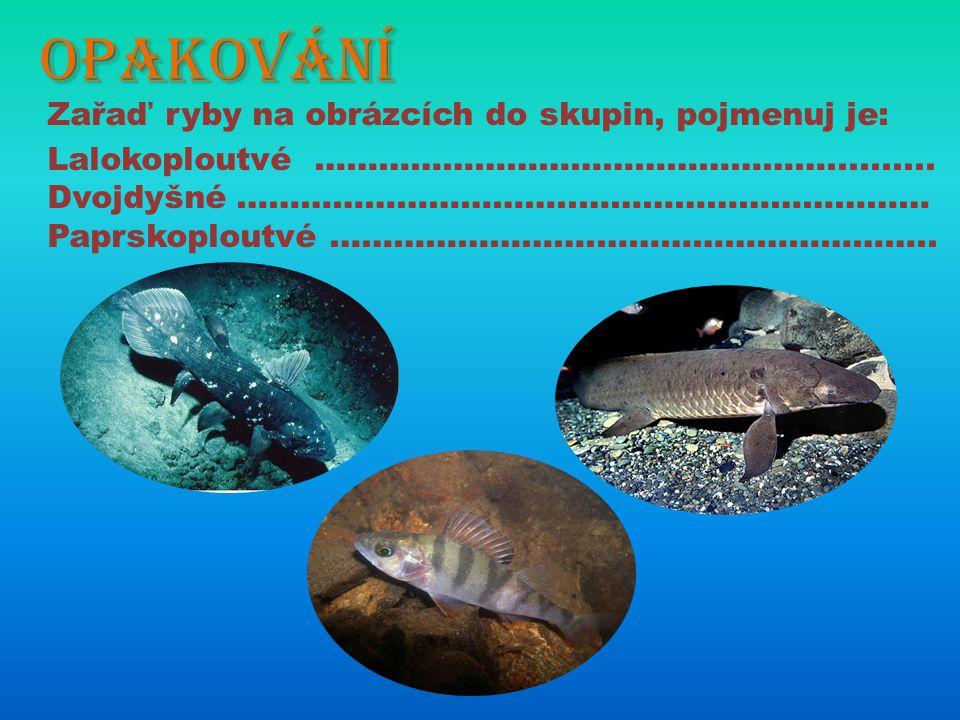 Nejznámější sladkovodní ryby Pokus se pojmenovat ryby na obrázcích, vytkni jejich charakteristické znaky.