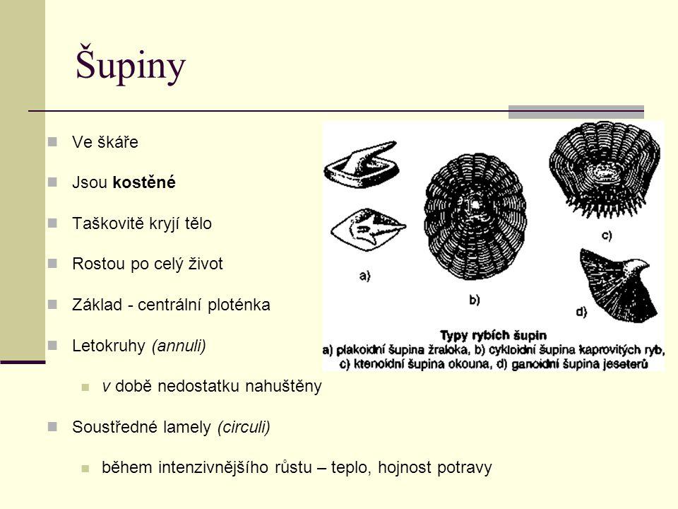 Další čeledi - zástupci Štika obecná Severní polokoule Loví plevelné druhy ryb Kapr obecný Aklimatizován pro chov v rybnících, prošlechtěn Důležitý pro české rybníkářství Karas obecný Plotice obecná Lín obecný Cejn velký