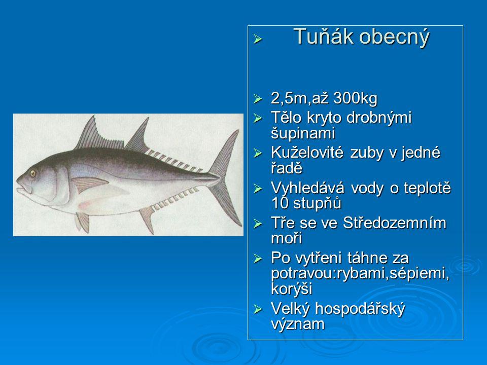  Tuňák obecný  2,5m,až 300kg  Tělo kryto drobnými šupinami  Kuželovité zuby v jedné řadě  Vyhledává vody o teplotě 10 stupňů  Tře se ve Středoze