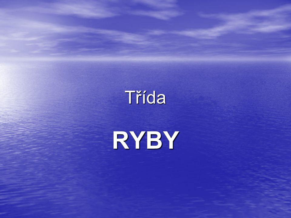 Třída RYBY