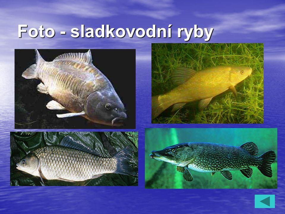 Foto - sladkovodní ryby