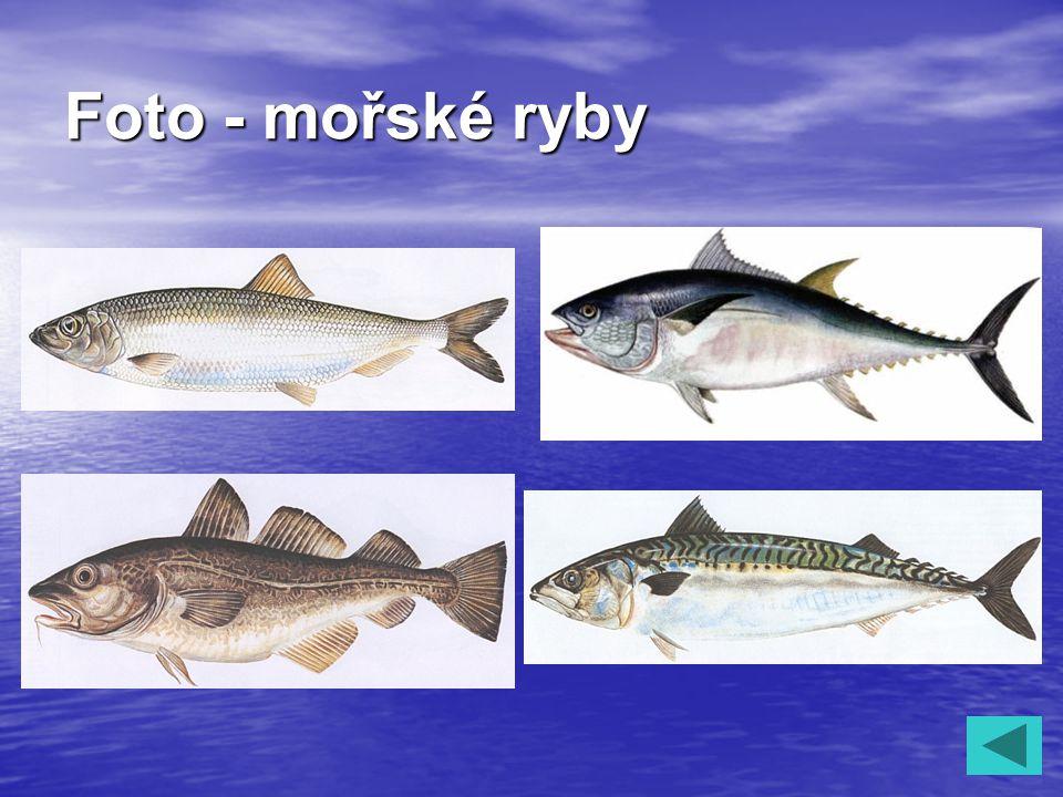 Foto - mořské ryby