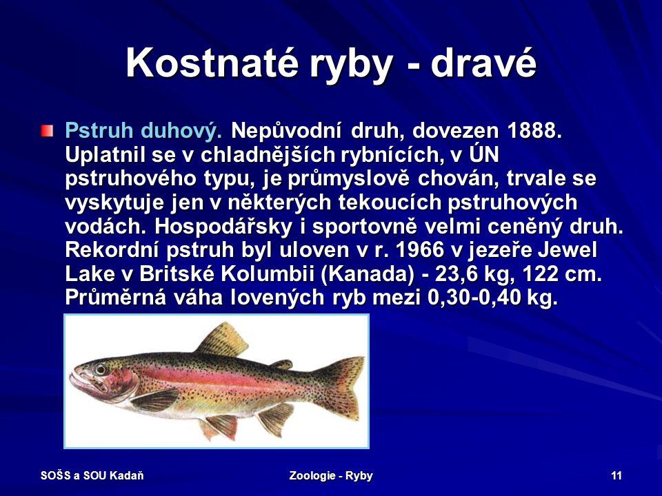 SOŠS a SOU Kadaň Zoologie - Ryby 11 Kostnaté ryby - dravé Pstruh duhový. Nepůvodní druh, dovezen 1888. Uplatnil se v chladnějších rybnících, v ÚN pstr