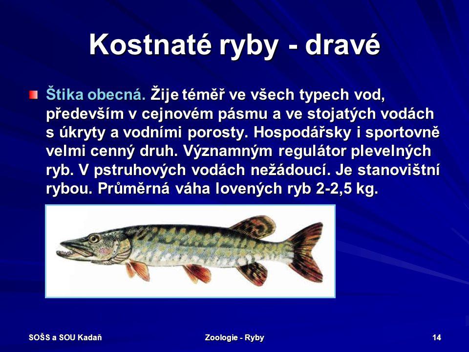 SOŠS a SOU Kadaň Zoologie - Ryby 14 Kostnaté ryby - dravé Štika obecná. Žije téměř ve všech typech vod, především v cejnovém pásmu a ve stojatých vodá