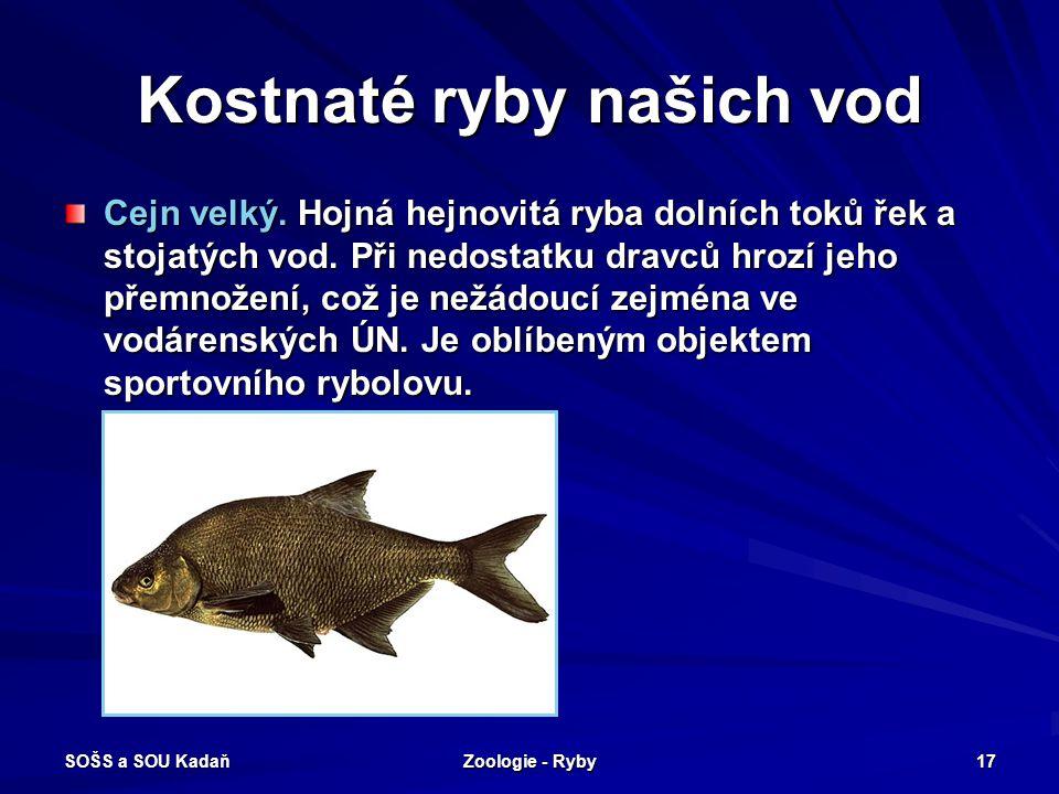 SOŠS a SOU Kadaň Zoologie - Ryby 17 Kostnaté ryby našich vod Cejn velký. Hojná hejnovitá ryba dolních toků řek a stojatých vod. Při nedostatku dravců
