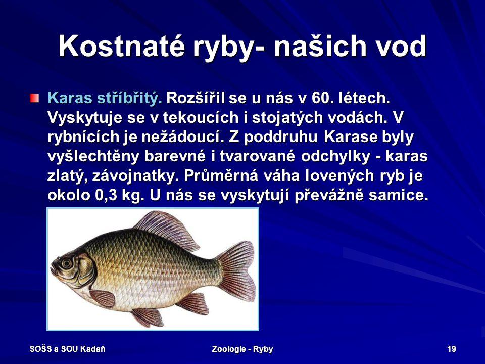 SOŠS a SOU Kadaň Zoologie - Ryby 19 Kostnaté ryby- našich vod Karas stříbřitý. Rozšířil se u nás v 60. létech. Vyskytuje se v tekoucích i stojatých vo