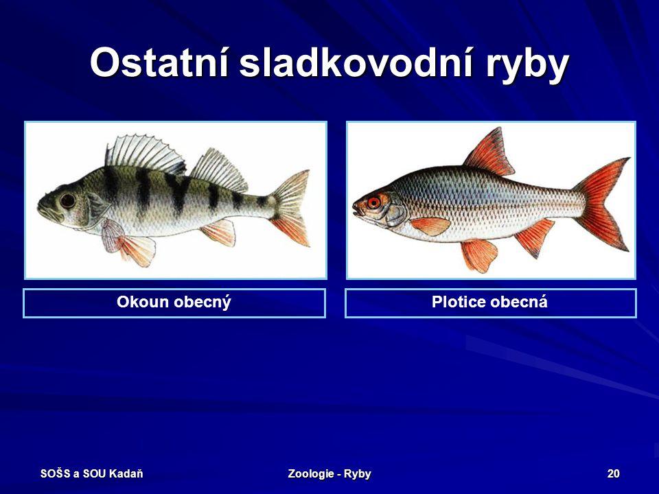 SOŠS a SOU Kadaň Zoologie - Ryby 20 Ostatní sladkovodní ryby Okoun obecnýPlotice obecná