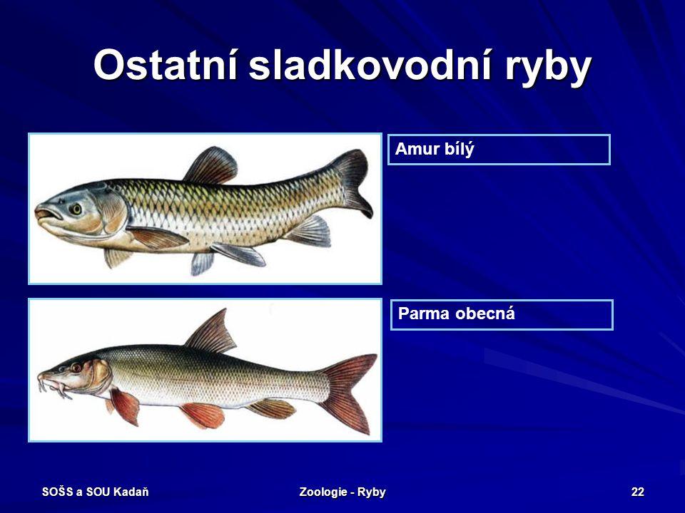 SOŠS a SOU Kadaň Zoologie - Ryby 22 Ostatní sladkovodní ryby Amur bílý Parma obecná