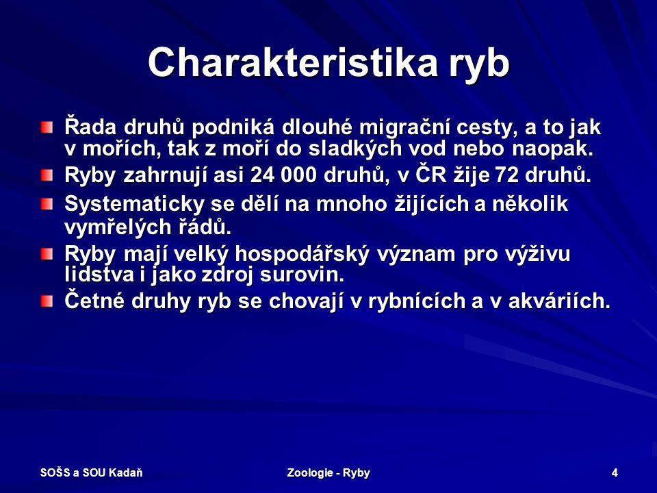 SOŠS a SOU Kadaň Zoologie - Ryby 15 Kostnaté ryby - dravé Sumec obecný.