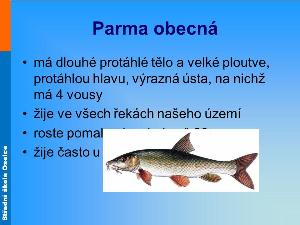 Střední škola Oselce Parma obecná má dlouhé protáhlé tělo a velké ploutve, protáhlou hlavu, výrazná ústa, na nichž má 4 vousy žije ve všech řekách naš