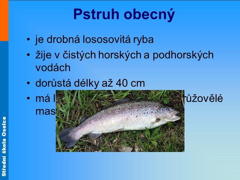 Střední škola Oselce Pstruh obecný je drobná lososovitá ryba žije v čistých horských a podhorských vodách dorůstá délky až 40 cm má lehce stravitelné,