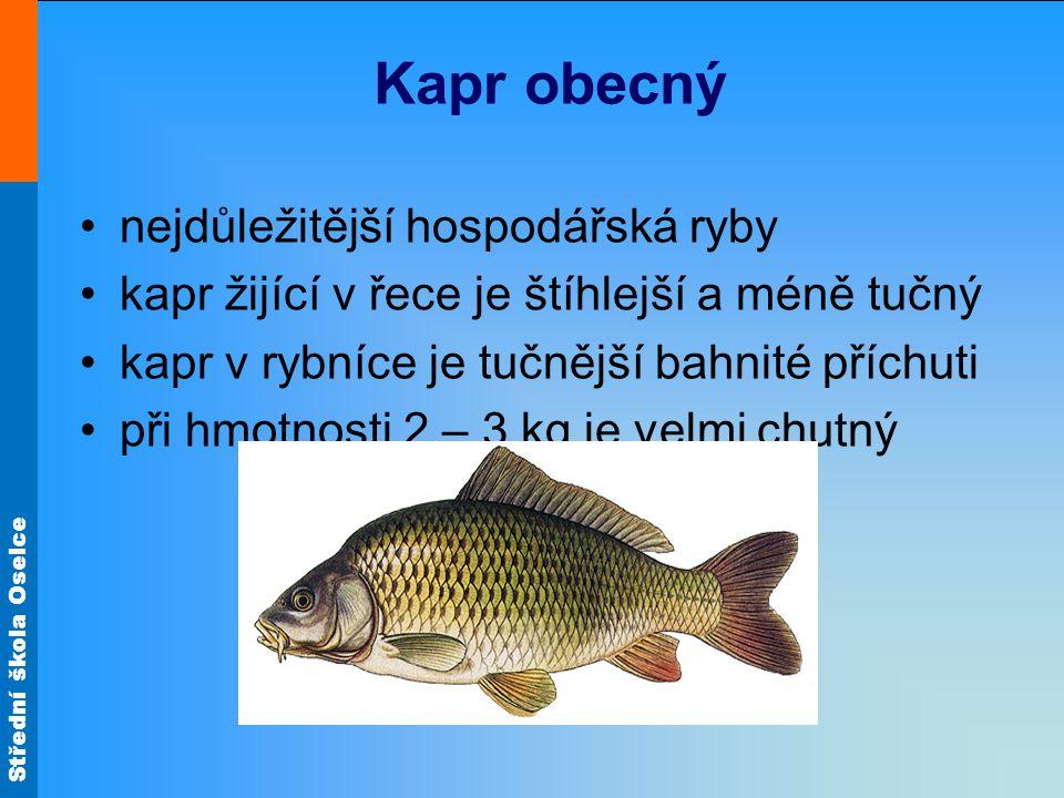 Střední škola Oselce Kapr obecný nejdůležitější hospodářská ryby kapr žijící v řece je štíhlejší a méně tučný kapr v rybníce je tučnější bahnité přích