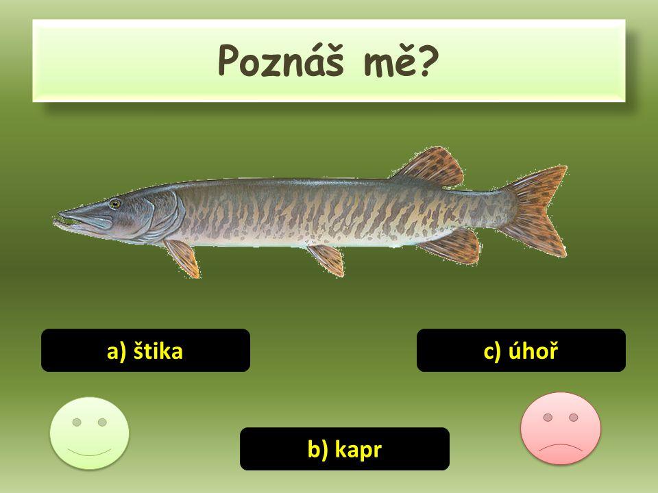 Poznáš mě? a) štika b) kapr c) úhoř