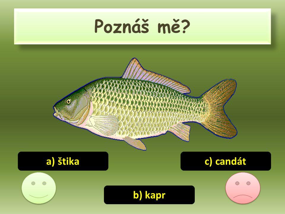 Poznáš mě? a) štika b) kapr c) candát