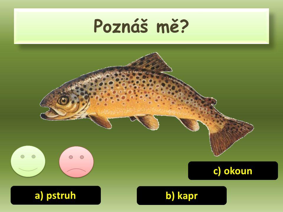 Poznáš mě? a) pstruh b) kapr c) okoun
