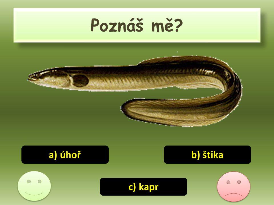 Poznáš mě? b) štika c) kapr a) úhoř