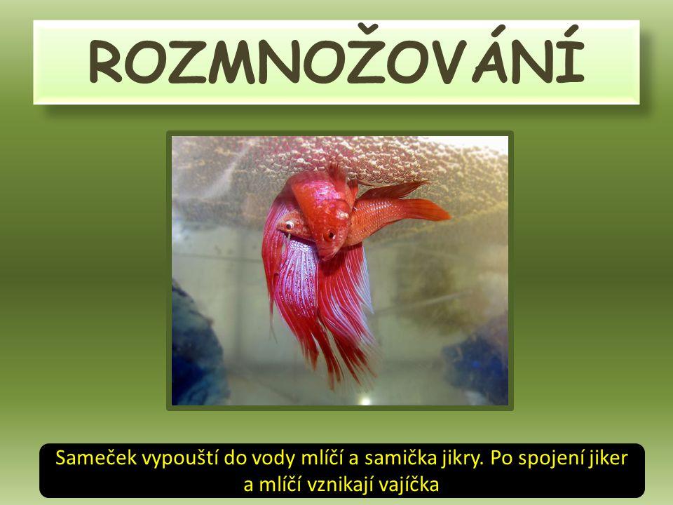 Rybí vajíčka Pamatuješ si, jak vznikají?