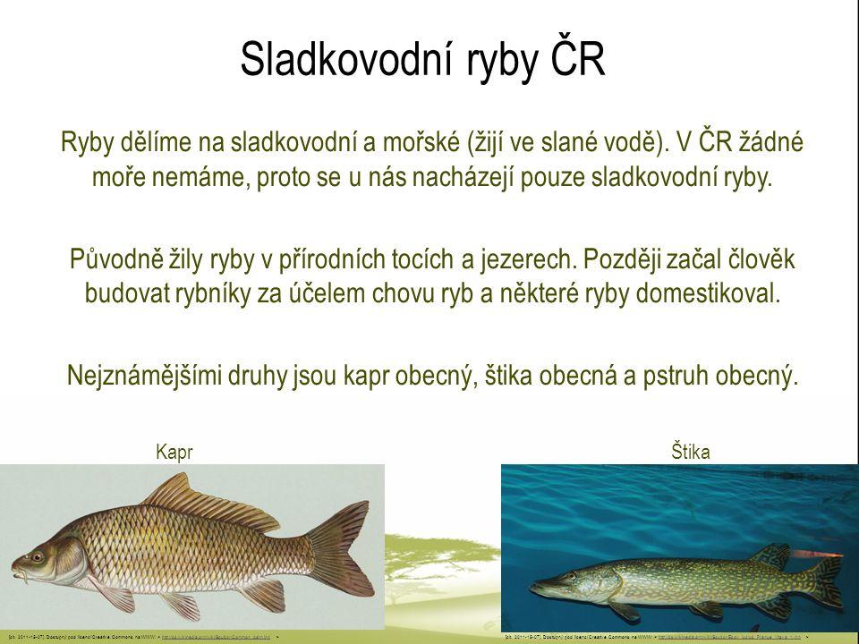 Sladkovodní ryby ČR Ryby dělíme na sladkovodní a mořské (žijí ve slané vodě). V ČR žádné moře nemáme, proto se u nás nacházejí pouze sladkovodní ryby.