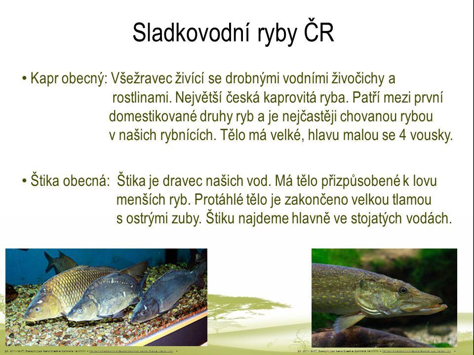 Sladkovodní ryby ČR Kapr obecný: Všežravec živící se drobnými vodními živočichy a rostlinami. Největší česká kaprovitá ryba. Patří mezi první domestik