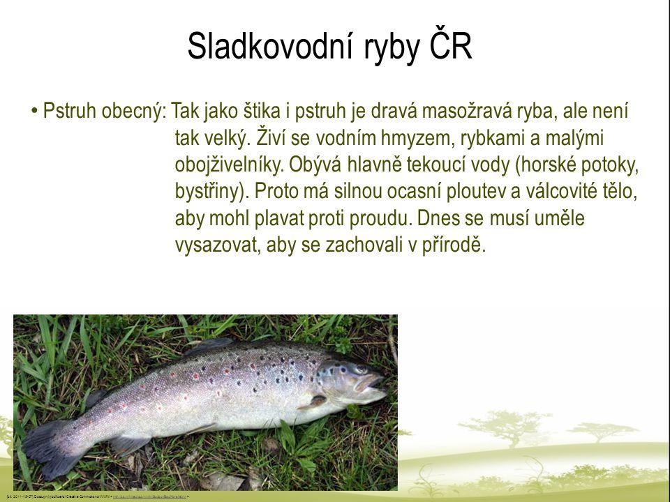 Sladkovodní ryby ČR Pstruh obecný: Tak jako štika i pstruh je dravá masožravá ryba, ale není tak velký. Živí se vodním hmyzem, rybkami a malými obojži