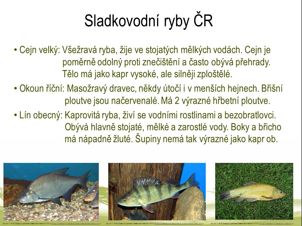 Sladkovodní ryby ČR Cejn velký: Všežravá ryba, žije ve stojatých mělkých vodách. Cejn je poměrně odolný proti znečištění a často obývá přehrady. Tělo
