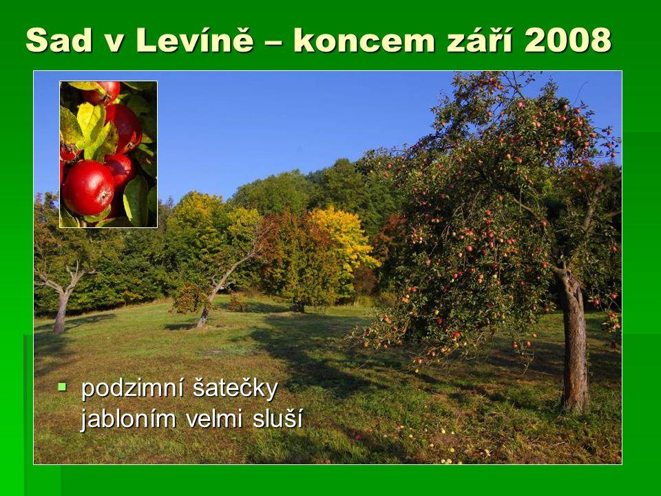 Sad v Levíně – koncem září 2008  podzimní šatečky jabloním velmi sluší